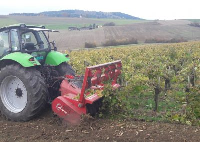 Agro-Weinbau-Reben